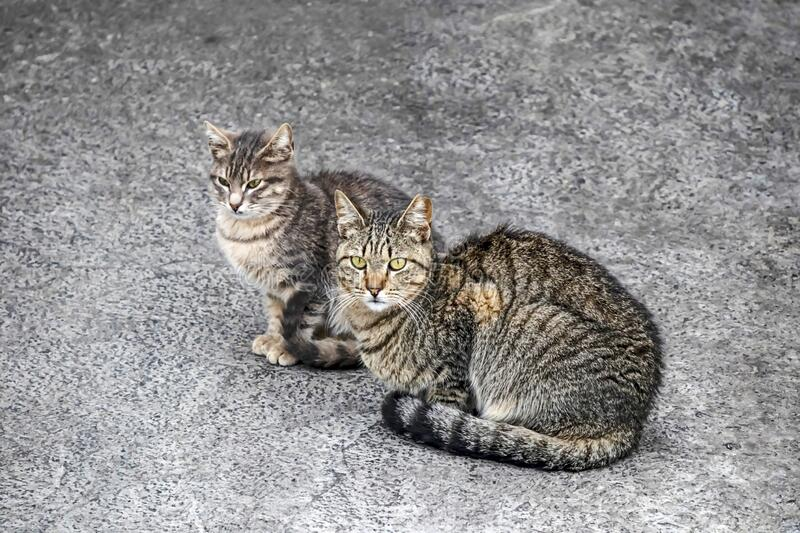 Cats are small mammals which most commonly refers to the domestic cat. Close up cats in nature stock image
