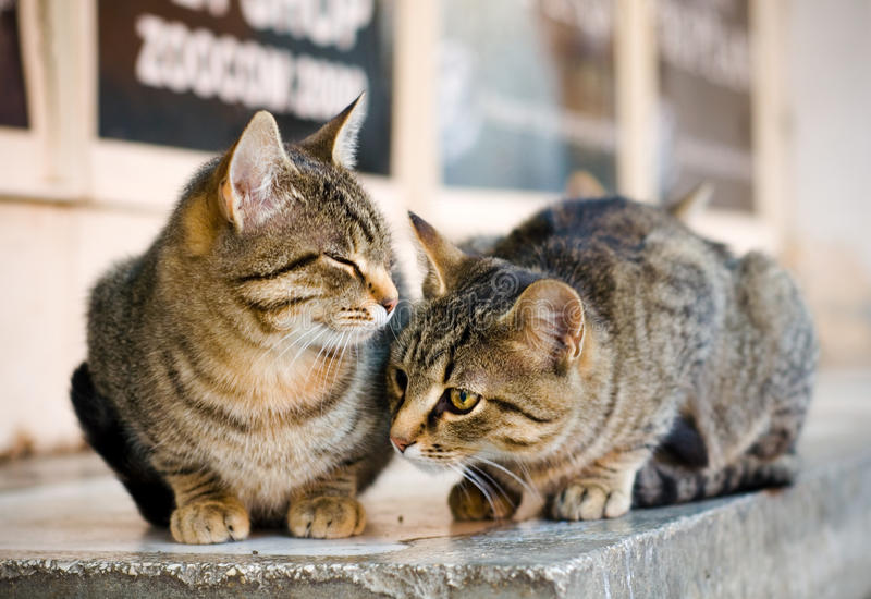 Cats on the street stock photo