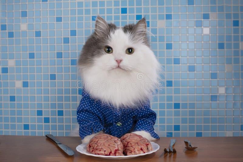 Cats surgeons discuss brain surgery.  royalty free stock photos