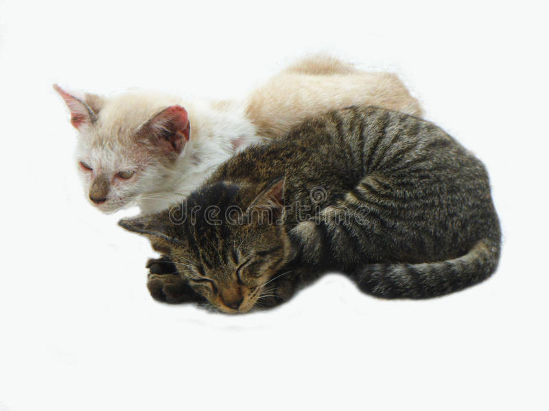 2 cats royalty free stock photography