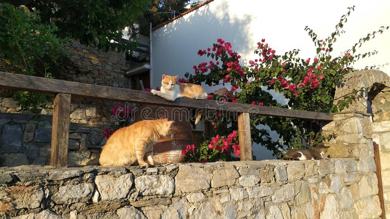 Cats taking in the sun, Greece islands royalty free stock images