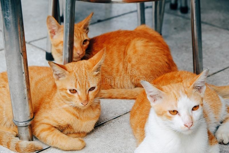 Cats in Thailand stock photo