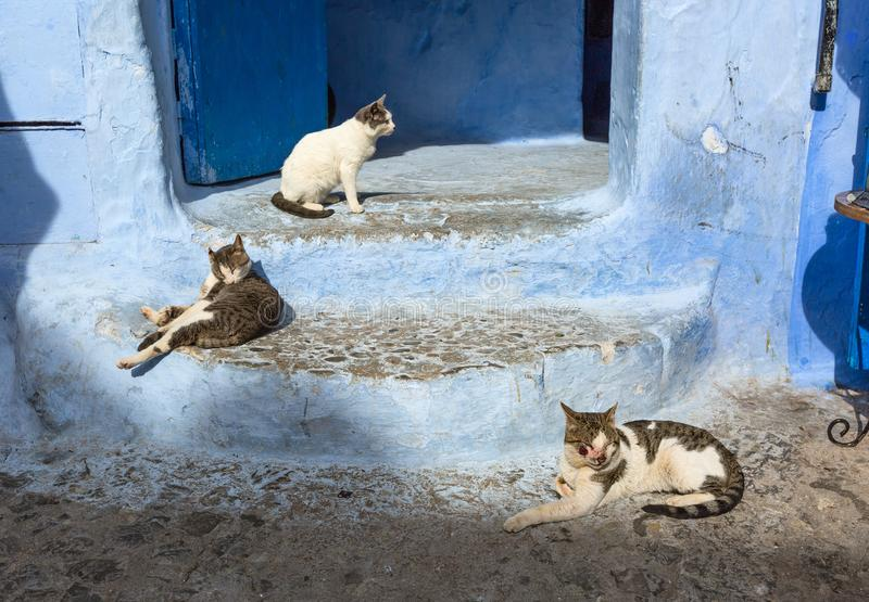 Cats on blue street in Medina Chefchaouen. Cats on traditional old blue street with inside Medina of Chefchaouen, Morocco stock image