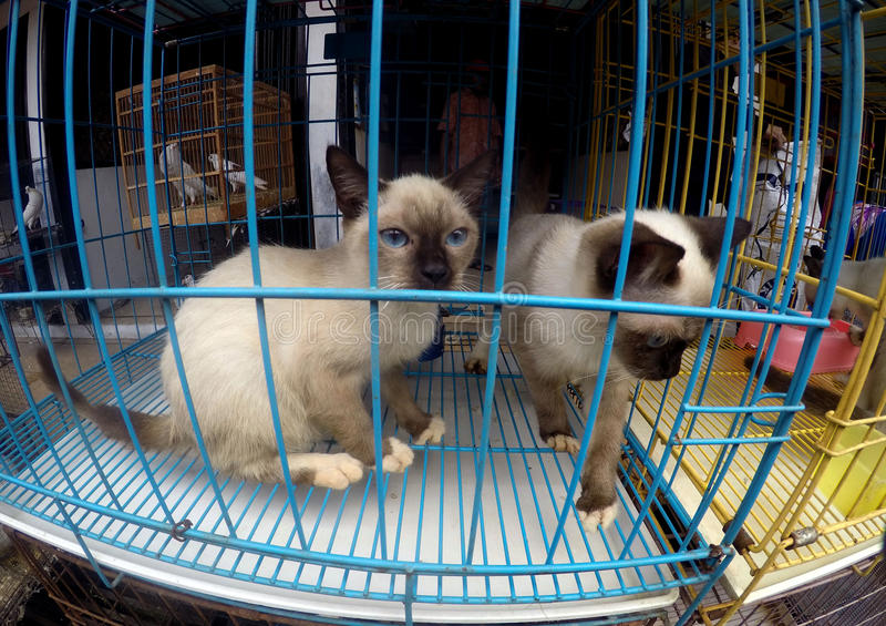 Cats. Various cats sold in pet market in the city of Solo, Central Java, Indonesia stock photo