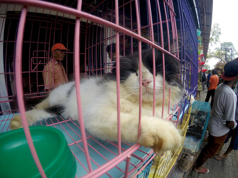 Cats. Various cats sold in pet market in the city of Solo, Central Java, Indonesia stock image