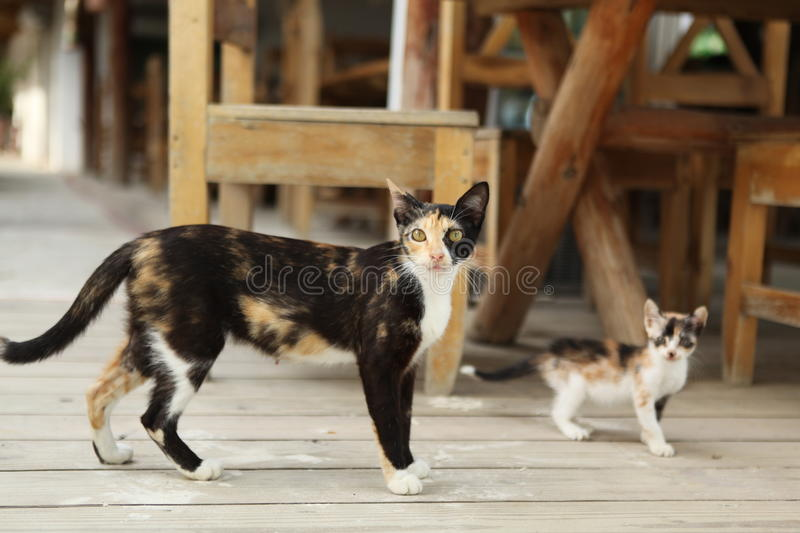Cats walk around the tables. stock images