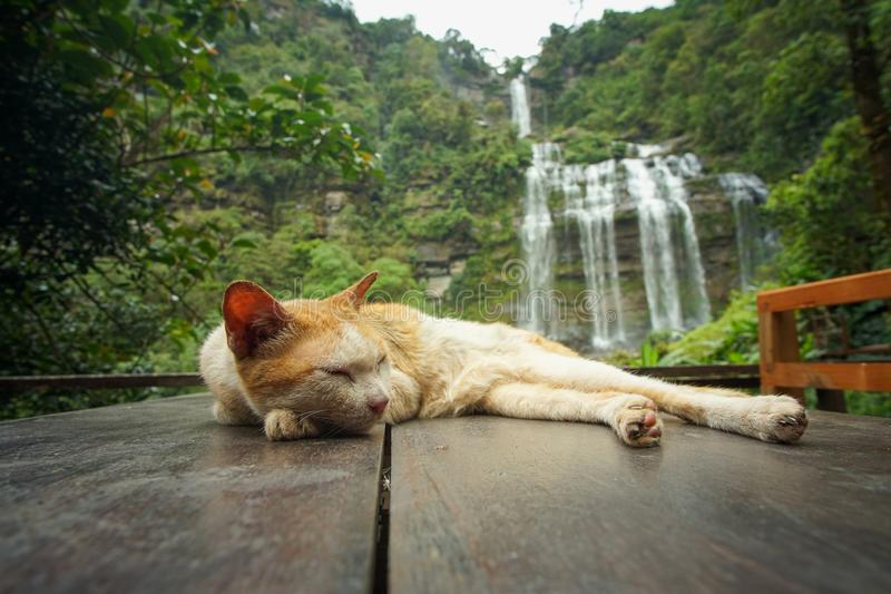 Cats and waterfalls in Laos. Cats and waterfalls in southern Laos, which are tropical forests stock photo