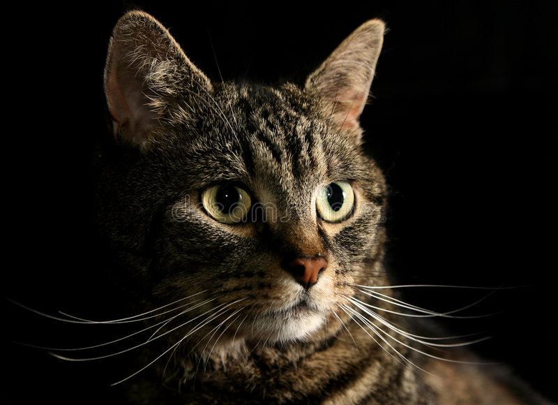 The Cats Whiskers Royalty Free Stock Photos