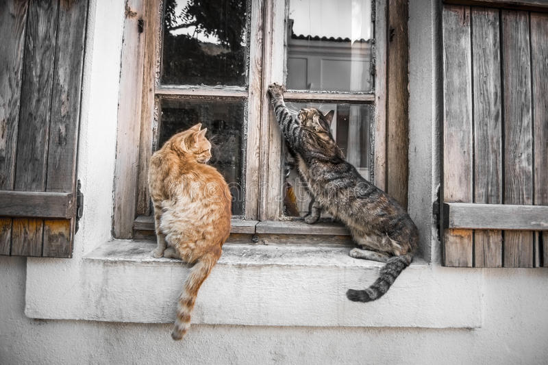 Cats in Window royalty free stock photography