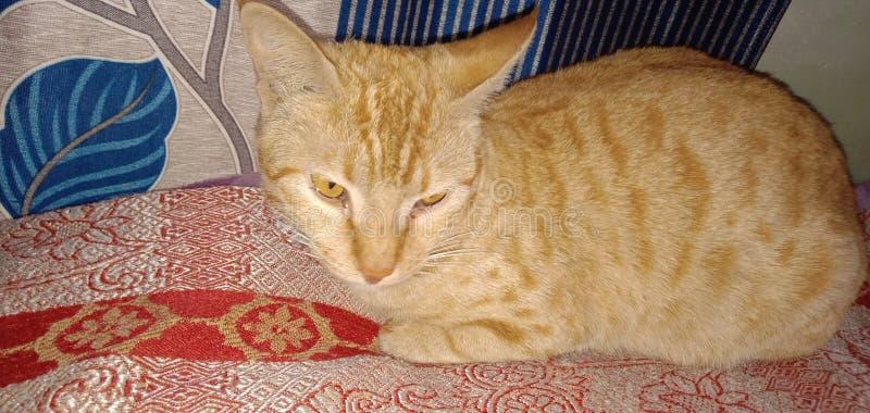 Catslove lizenzfreies stockfoto