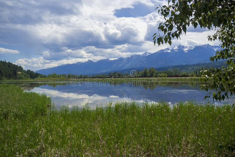 Cattail wetland. With mountain reflection in water stock photo