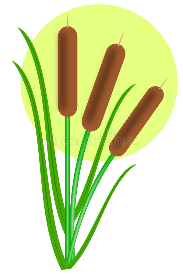 Download Cattails stock vector. Image of swamp, natural, grass - 9347653