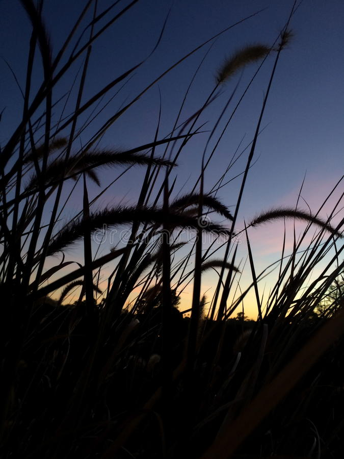 Cattails bij zonsondergang royalty-vrije stock afbeeldingen