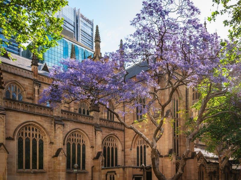 Cattedrale del ` s di St Andrew a Sydney in primavera immagini stock libere da diritti
