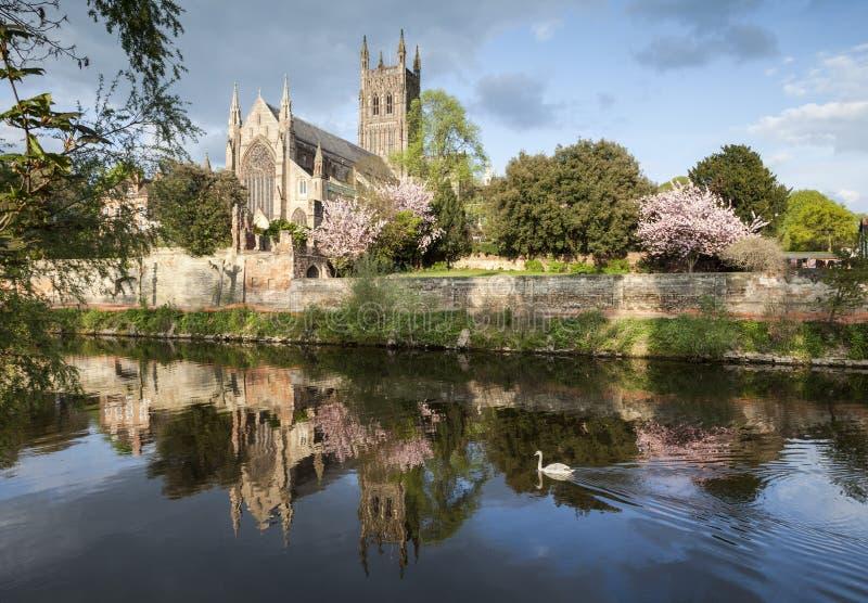 Cattedrale di Worcester su una sera fine della sorgente fotografia stock libera da diritti