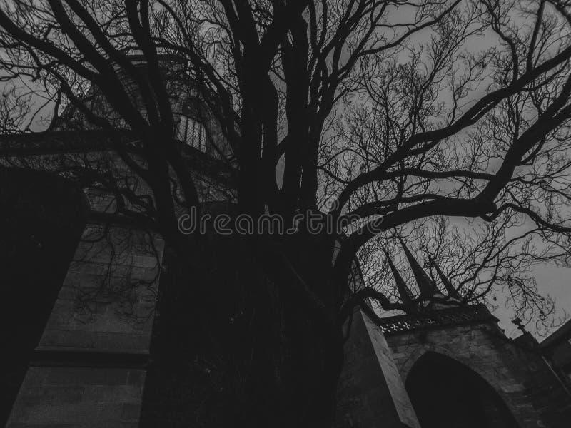 Cattedrale dietro gli alberi Appena come una scena di film Lunatico e spettrale immagini stock