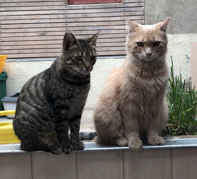 Cattivi gatti fotografia stock