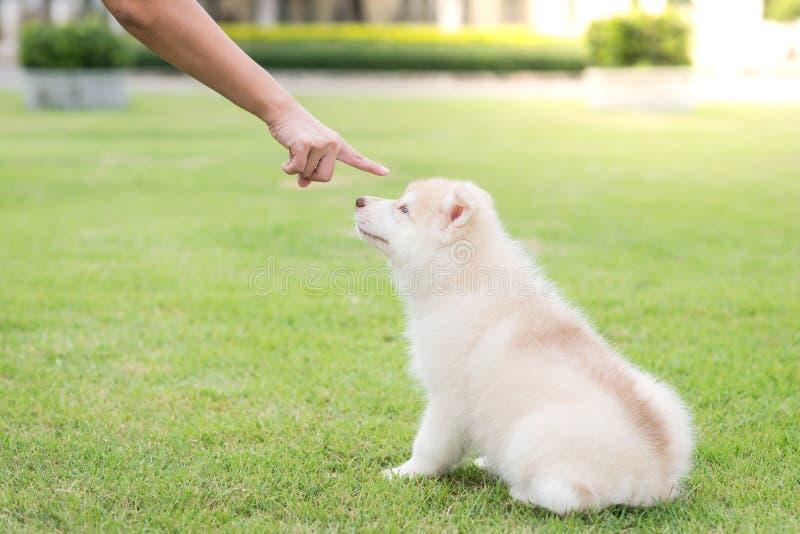 Cattivo cane di comportamento che è punito fotografie stock libere da diritti