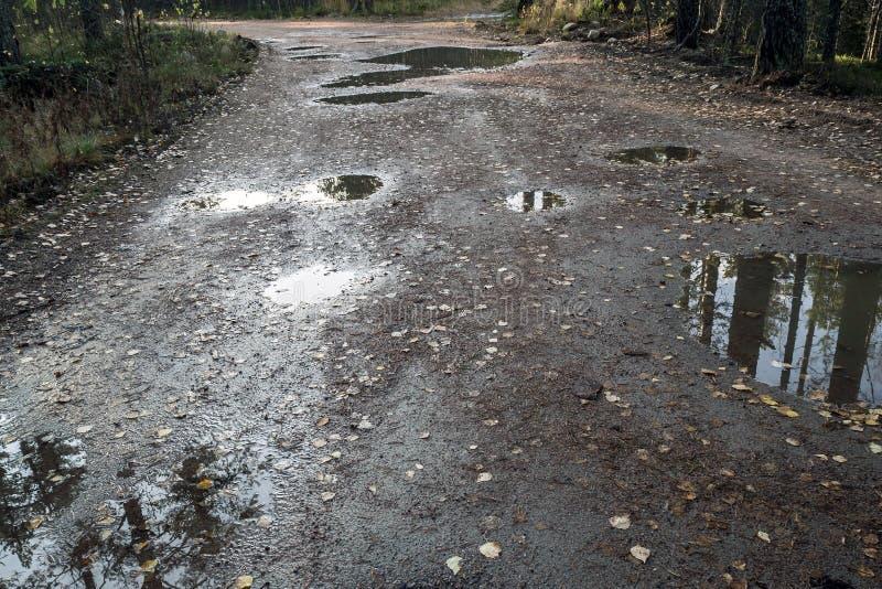 Cattivo sentiero forestale in un'abetaia dopo la pioggia fotografie stock