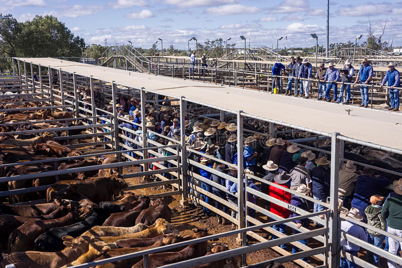 Cattle auction royalty free stock photography