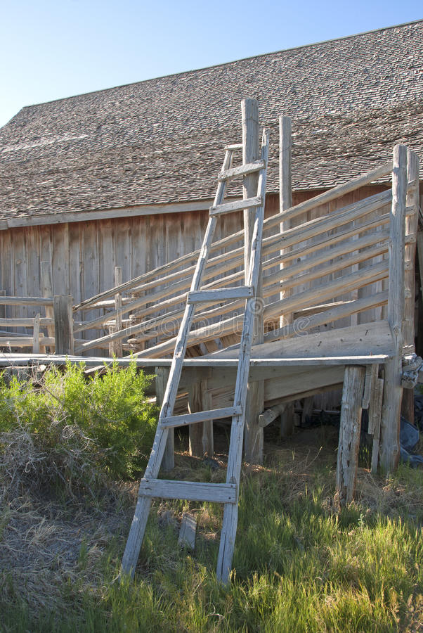 Download Cattle Chute stock photo. Image of agriculture, obsolete - 39502142