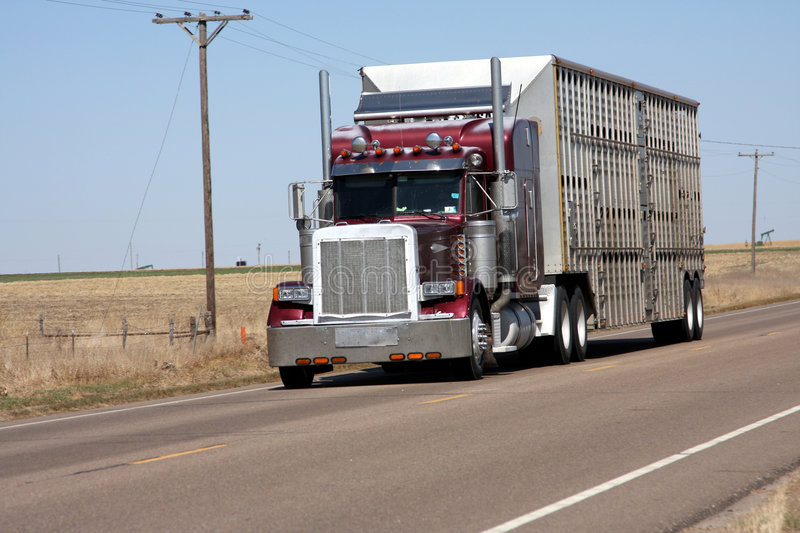 Cattle delivery royalty free stock images