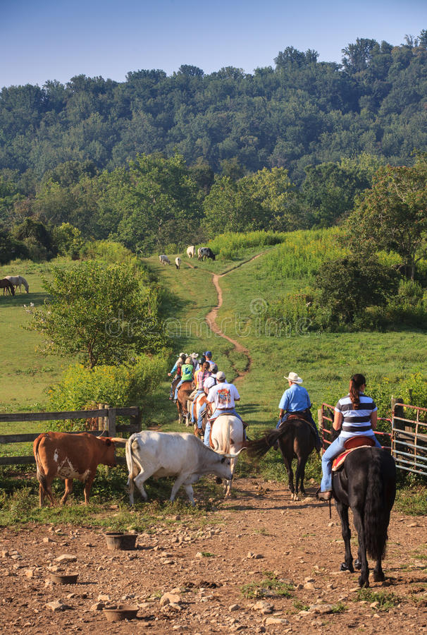 Cattle Drive Marriott Ranch in Virginia. Horse riders on the Marriott ranch in the Virginia countryside saddle up and move out on a cattle drive. This horse stock photography