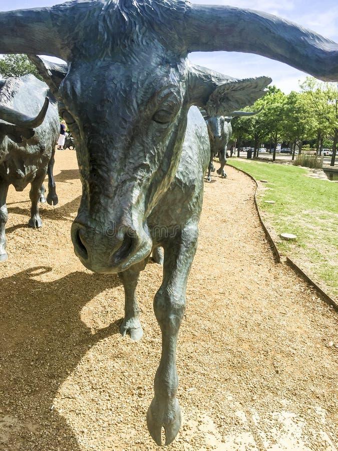 Cattle Drive Sculpture, Dallas stock images
