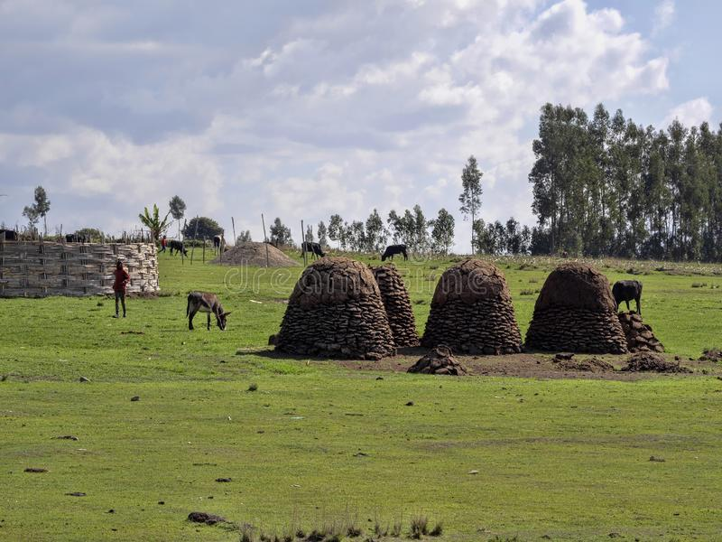 Cattle droppings are a valuable raw material for heating, Ethiopia. The Cattle droppings are a valuable raw material for heating, Ethiopia royalty free stock photo