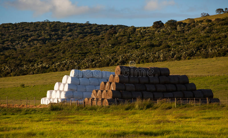 Cattle Feed Haystacks Stock Photo