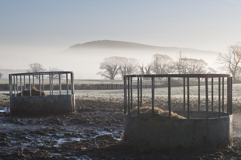 Cattle Feeders stock image