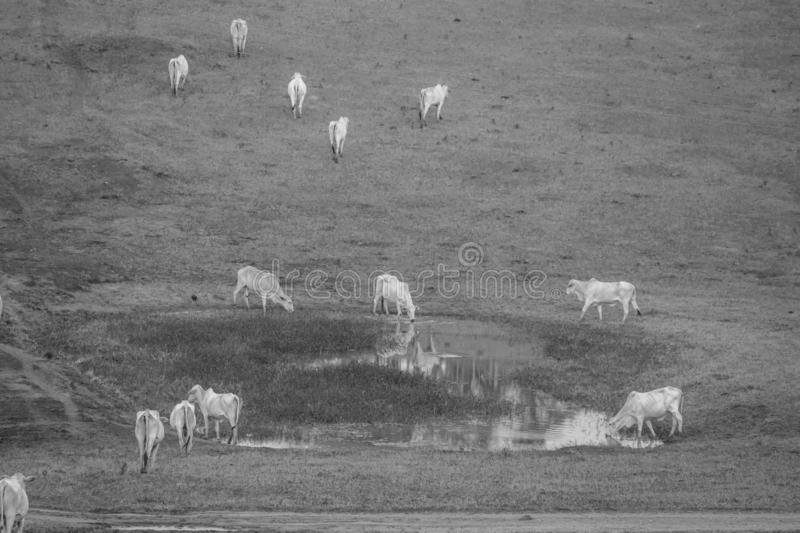 Water to reflescar. After the cattle graze on the pasture, has a water tank to quench thirst stock photo
