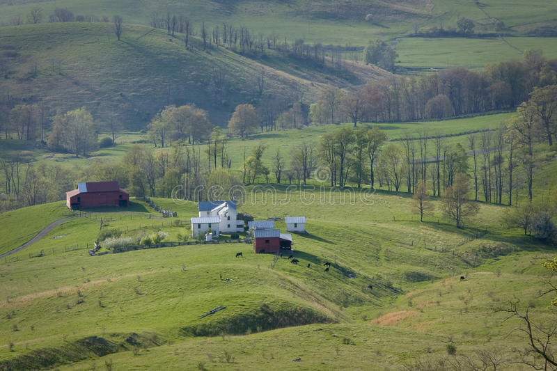 Cattle grazing on a mountain farm in Virginia royalty free stock photo