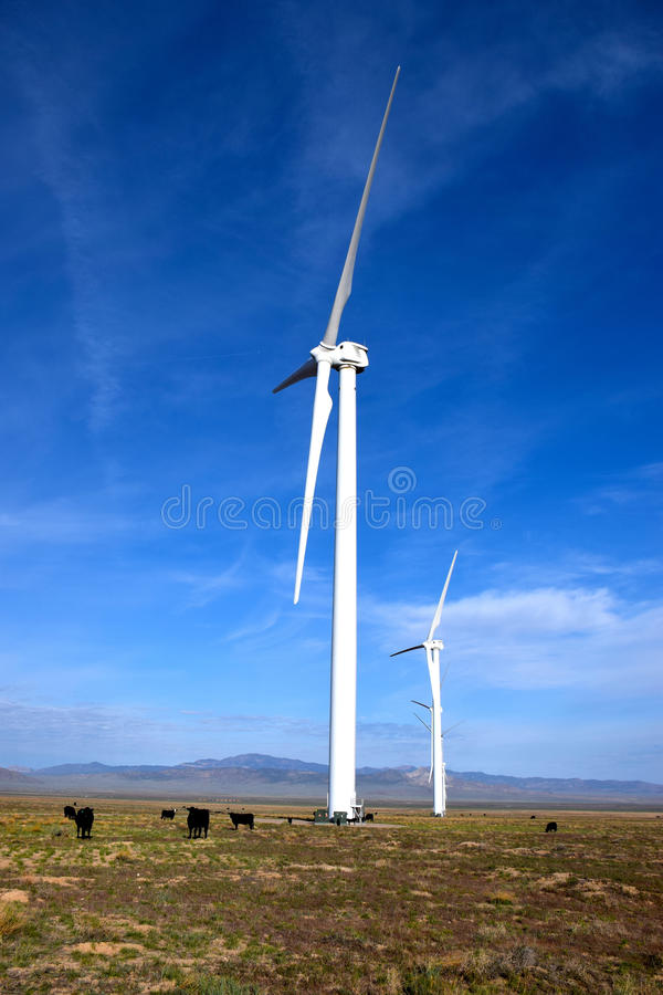 Cattle Grazing on a Wind Farm stock photos