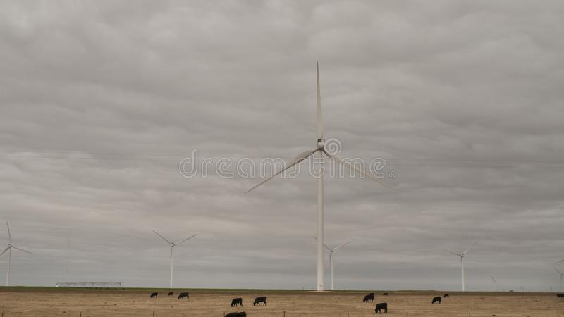 North Texas landscape with cattle and wind turbines. Cattle industry or agriculture combined with wind turbines for electric power on a cloudy day in the north royalty free stock photography