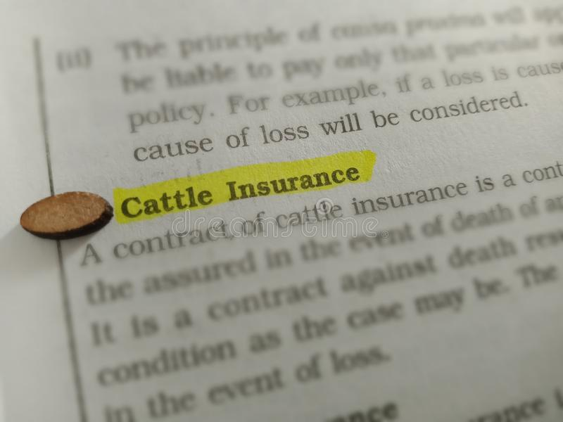 cattle insurance financial words displaying on highlighted pattern royalty free stock photos
