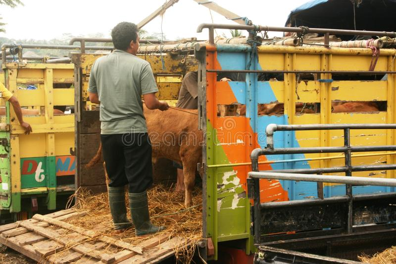 Download Cattle market editorial photography. Image of herd, animal - 35288997