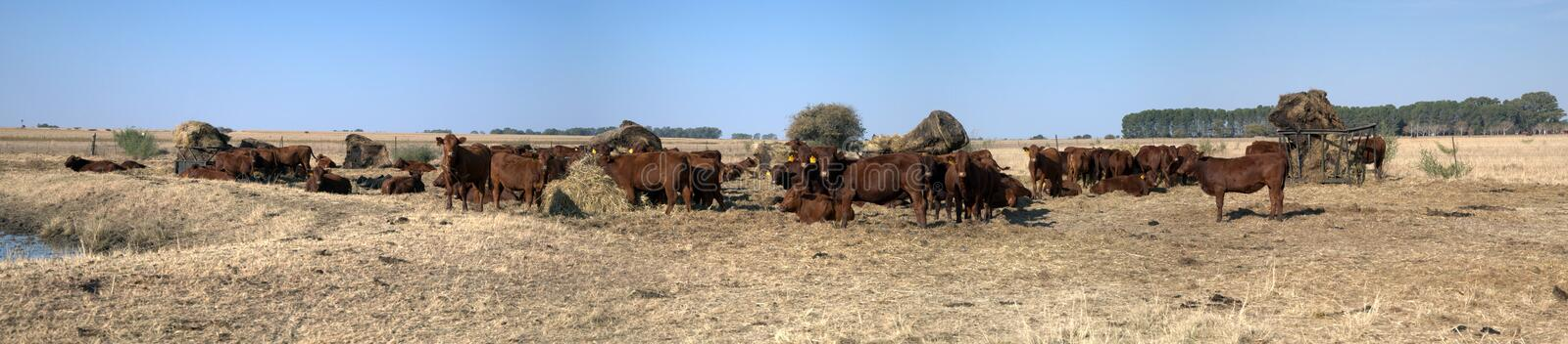 Cattle Ranch. Royalty Free Stock Photography