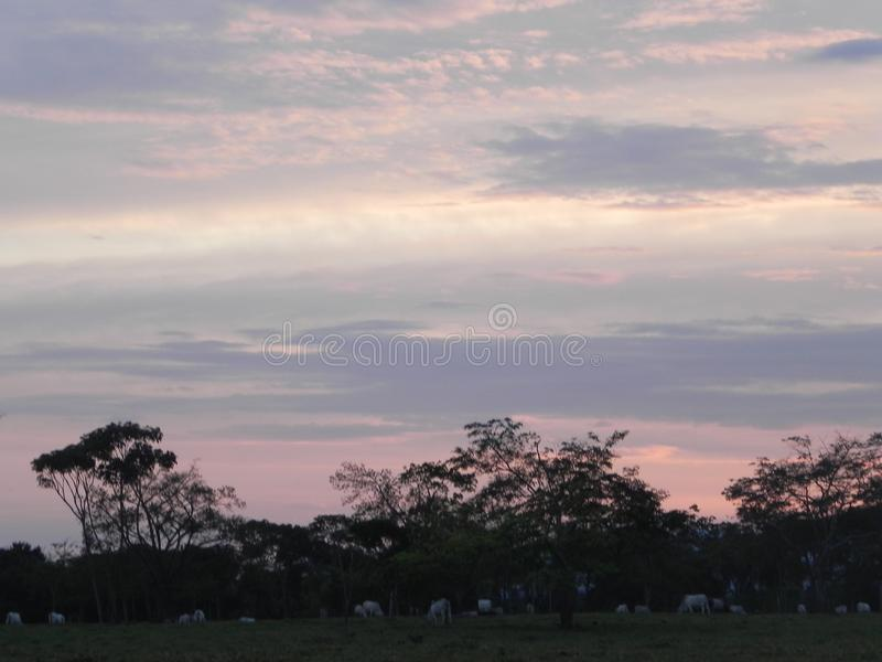 Cattle ranching landscape in the sunrise. Sunrise in a cattle ranching landscape in Colombian Llanos with a magical sky royalty free stock images