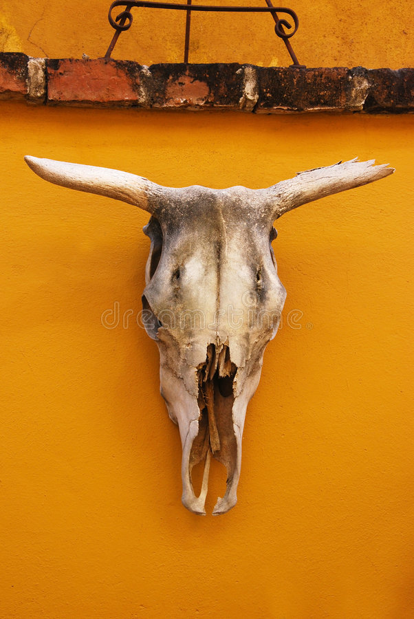 Download Cattle Skull Royalty Free Stock Image - Image: 3253126