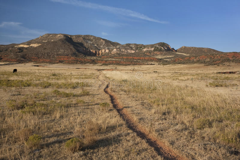 Cattle trail in Colorado mountain valley. Cattle trail in Red Mountain Open Space, semi desert landscape in northern Colorado near Wyoming border, late summer stock photography