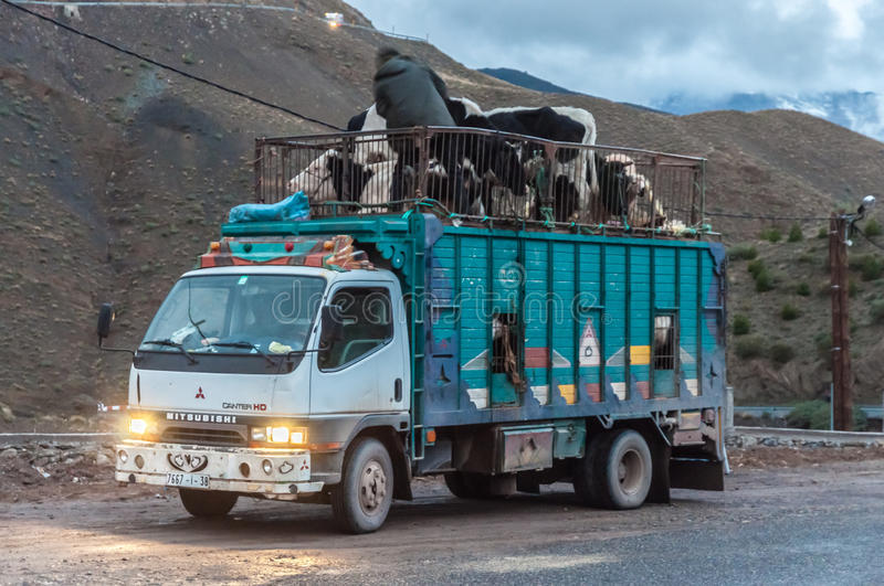 Cattle transport truck in Morocco. Cattle transport truck in the Atlas Mountains. Morocco, Africa royalty free stock images