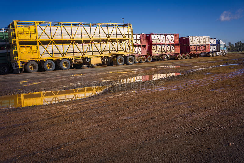 Cattle truck roadtrain royalty free stock photo
