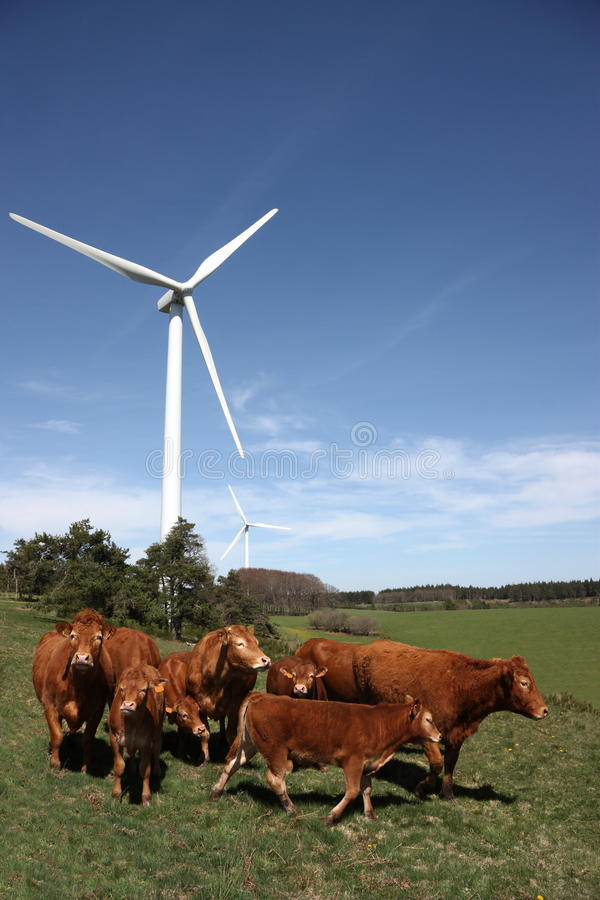 Cattle And Wind Energy Royalty Free Stock Image