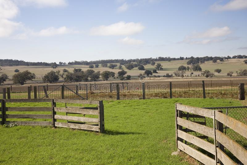 Cattle Yards of Australia. stock images