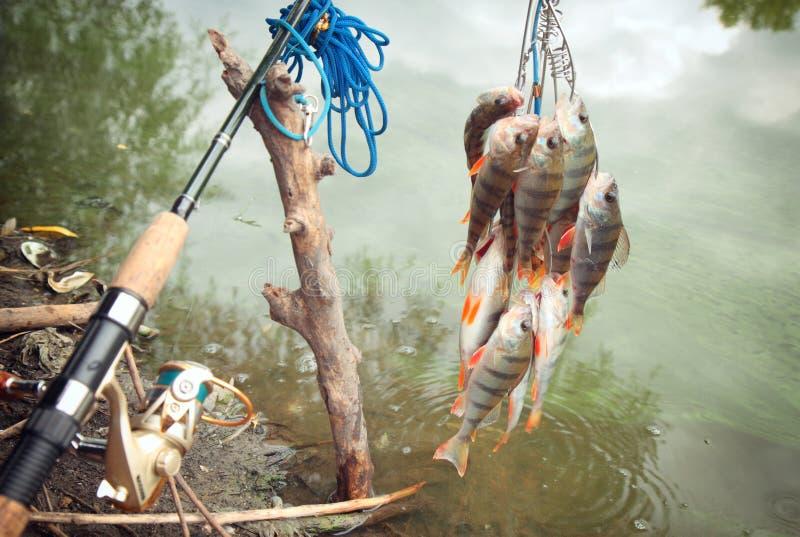 Cattura dei pescatori immagine stock