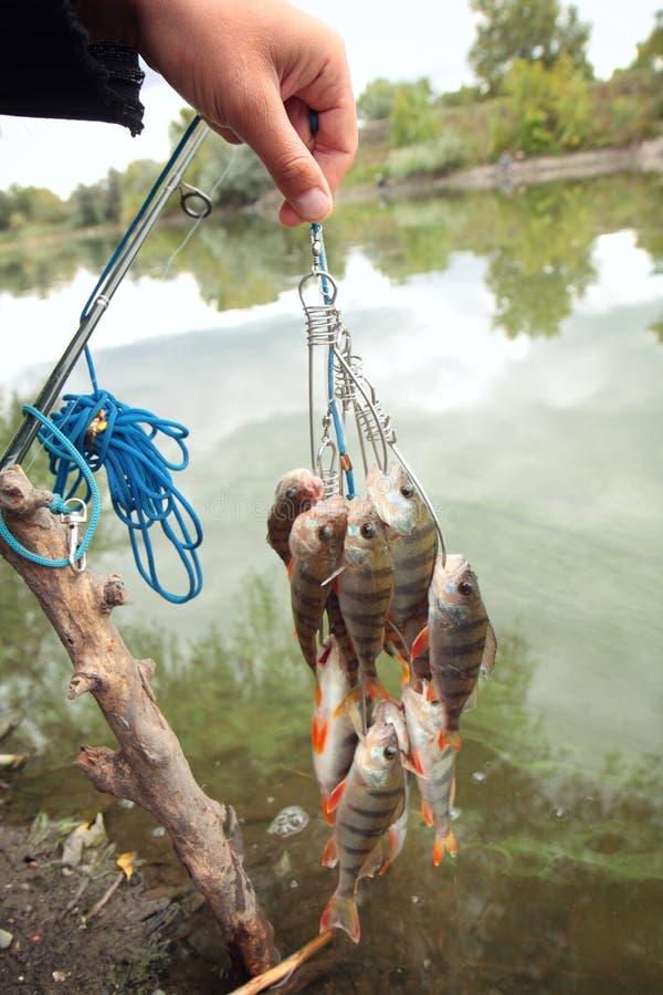 Cattura di pesca. fotografie stock libere da diritti