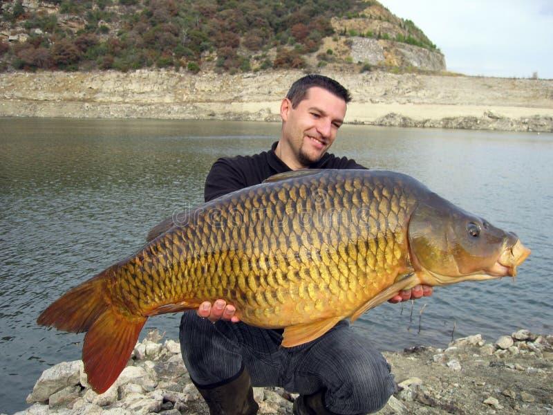 Cattura di pesce. Carpa comune immagine stock