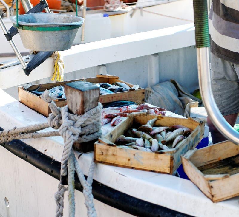 Cattura di pesci freschi   fotografie stock