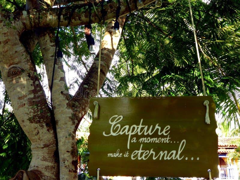 Catturi un sospiro di momento che appende negli alberi con testo lo rendono eterno immagini stock